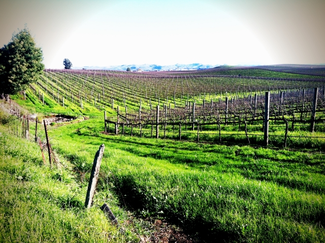 Carneros Country