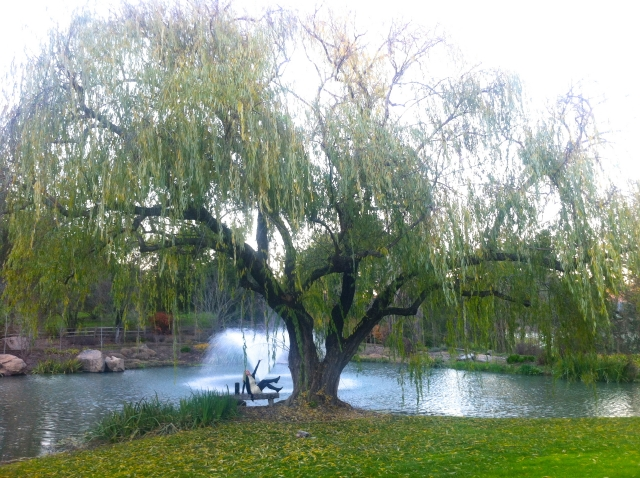 Under the Weeping Willow at Far Niente